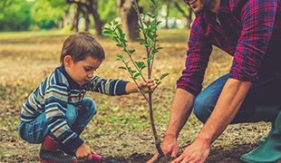 Young boy helping to plant a sapling tree with his father