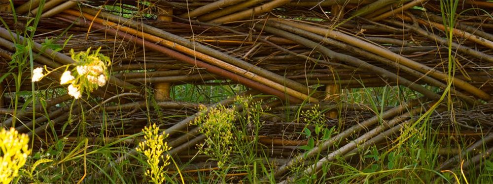 Close up of grasses and reeds