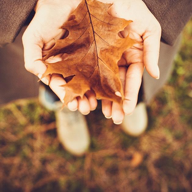 Open hands holding a fallen leaf